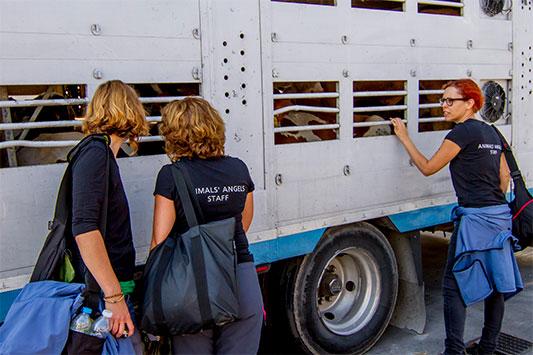 Mitarbeiterinnen von Animals' Angels kontrollieren einen Tiertransport