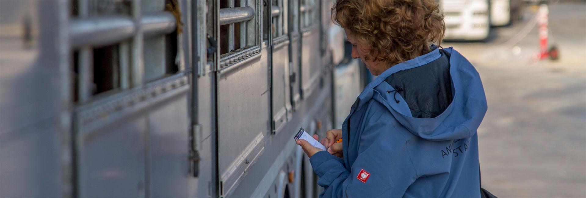 Animals' Angels MItarbeiterin Julia dokumentiert die Zustände in einem Tiertransporter