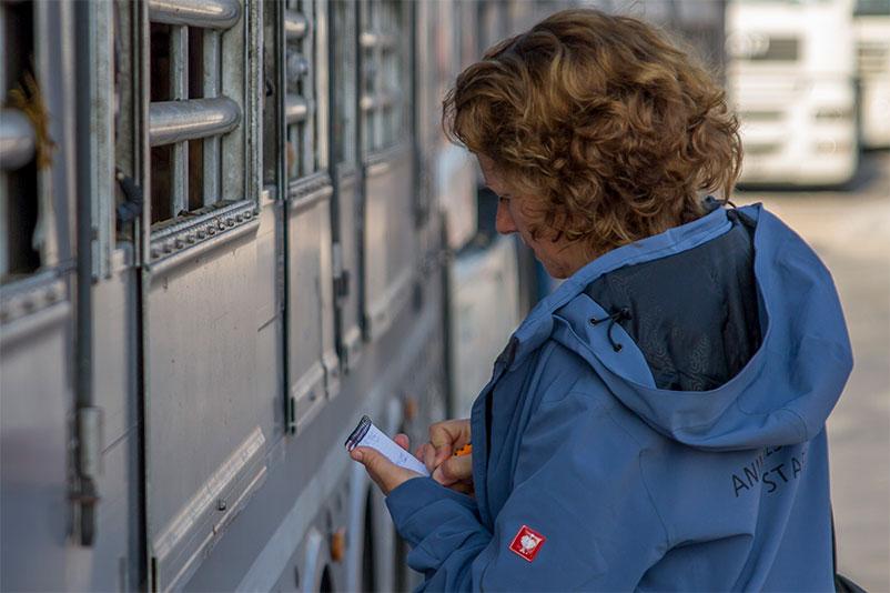 Julia von Animals' Angels kontrolliert einen Tiertransport