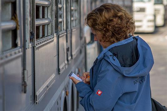 Eine Mitarbeiterin von Animals' Angels kontrolliert einen Tiertransport