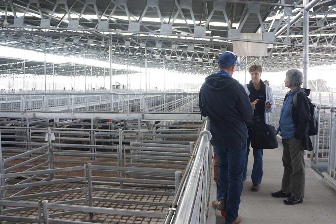 Animals' Angels spricht mit dem Betreiber eines Saleyards in Australien