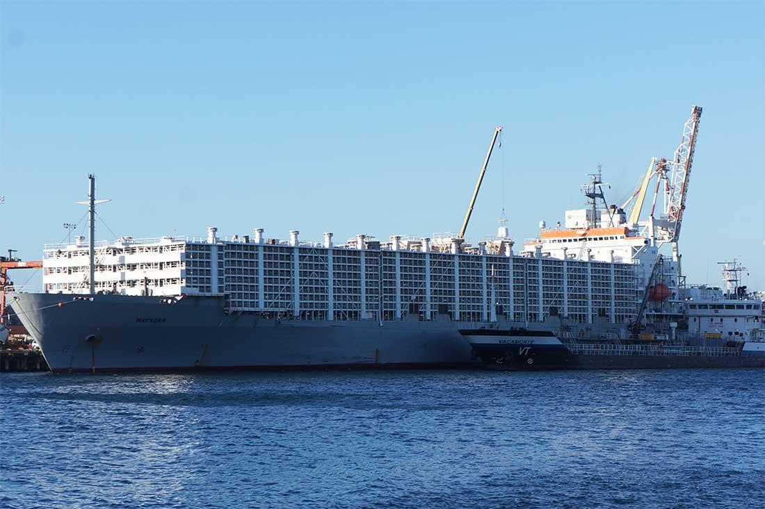 Tiertransportschiff in Australien am Hafen