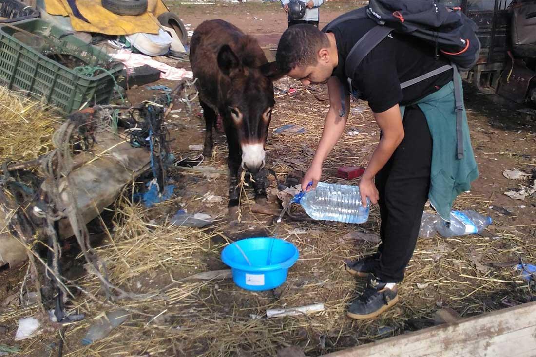 Tiermarkt in Marokko: Das Team von Animals' Angels gibt einem durstigen Esel Wasser