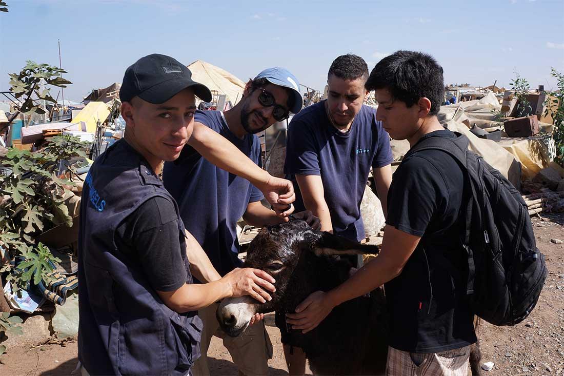 Das Team von Animals' Angels versorgt die Wunde eines Esels auf einem Tiermarkt in Marokko