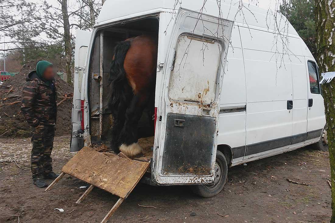 Tiermarkt in Polen: Ein Pferd in einem völlig ungeeigneten Fahrzeug