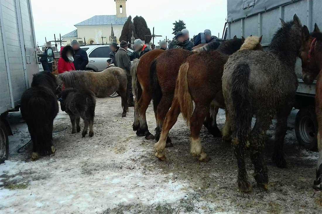 Tiermarkt in Polen: Pferde ohne Wasser und Futter den ganzen Tag an den Fahrzeugen festgebunden