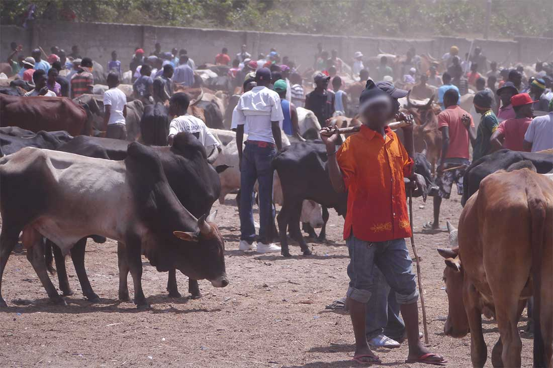 Tiermarkt in Tansania: Markttreiben