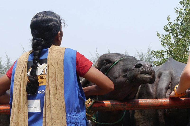 Sopie und Sri Devi kontrollieren einen Rindertransport auf einem Tiermarkt in Indien