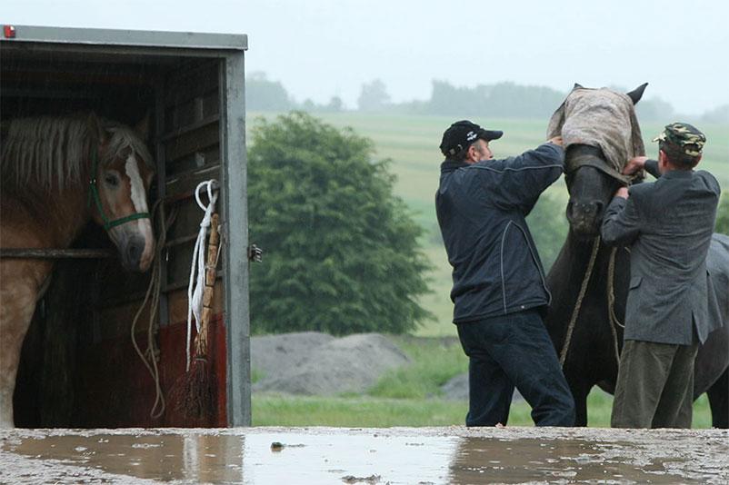 Tiermarkt in Polen: Zwei Männer verladen ein Pferd in einen Transporter