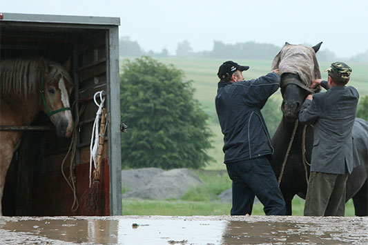 Animal Market in Poland: A Horse is Being Loaded Into a Transport Vehicle