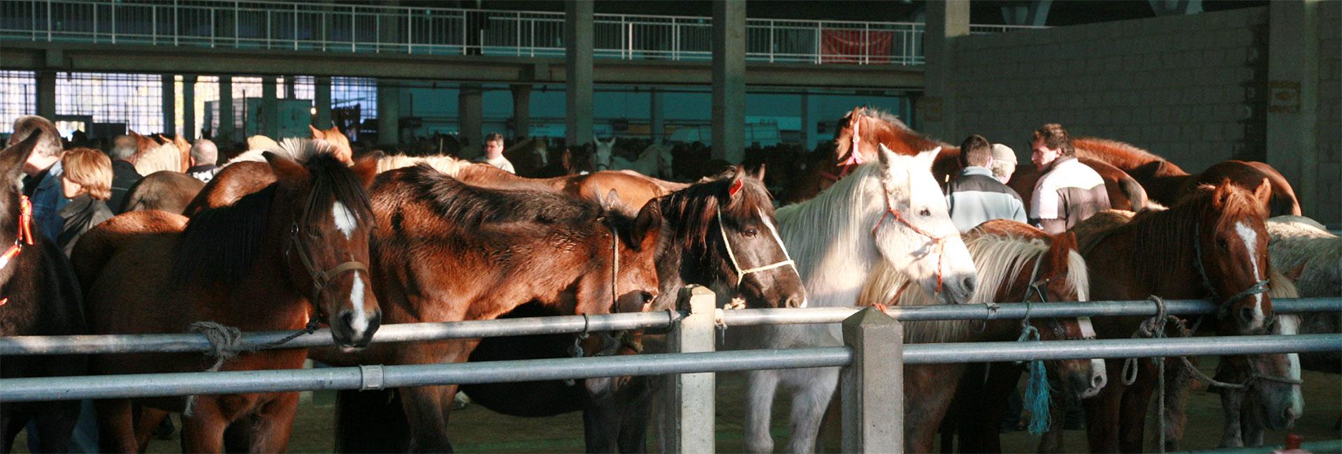 Pferde auf einem Tiermarkt in Spanien