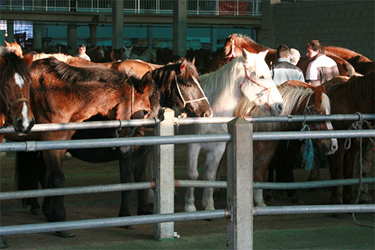 Horses Tethered to a Rail at Animal Market in Spain