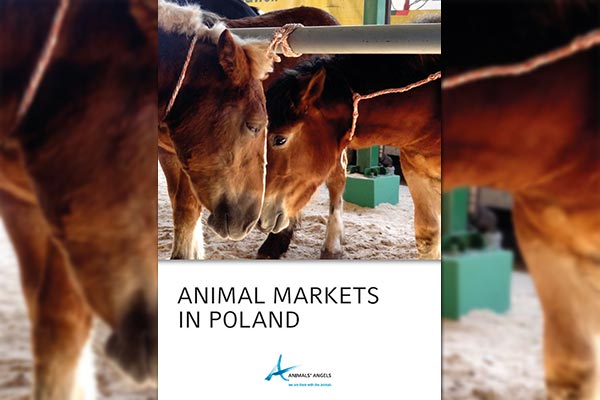 Animal Markets in Poland