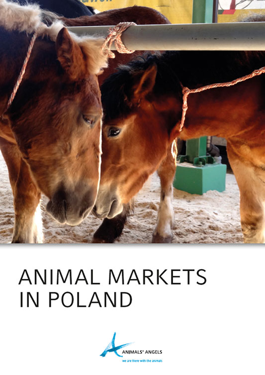 [Translate to englisch:] Dokumentation: Animal Markets in Poland