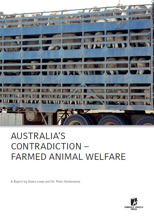 [Translate to englisch:] Dokumentation: Australias Contradiction – Farmed Animal Welfare