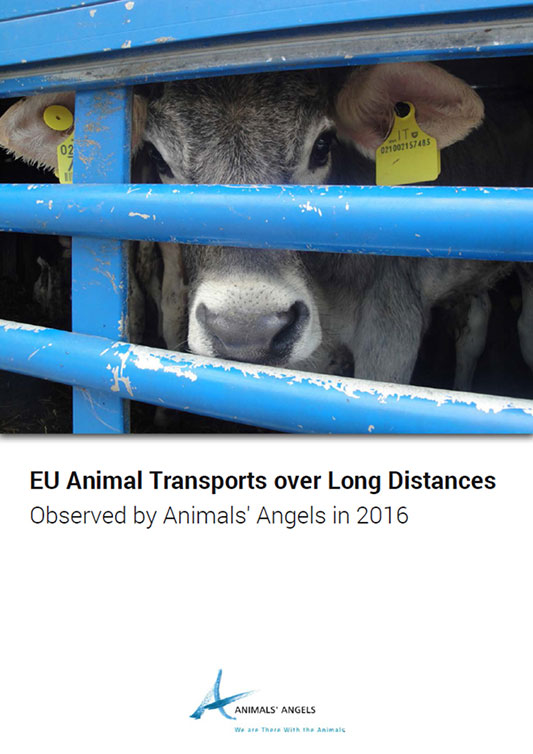 [Translate to englisch:] Dokumentation: Tiertransporte Sammelbericht 2016