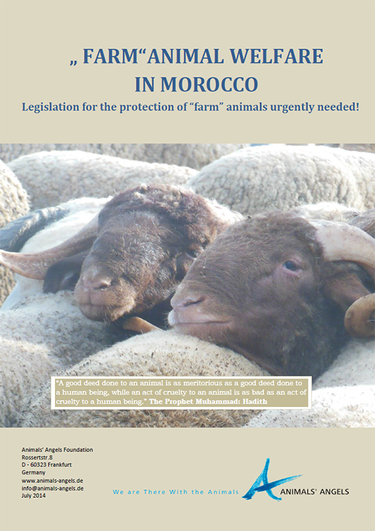 [Translate to englisch:] Dokumentation: Farm Animal Welfare in Morocco