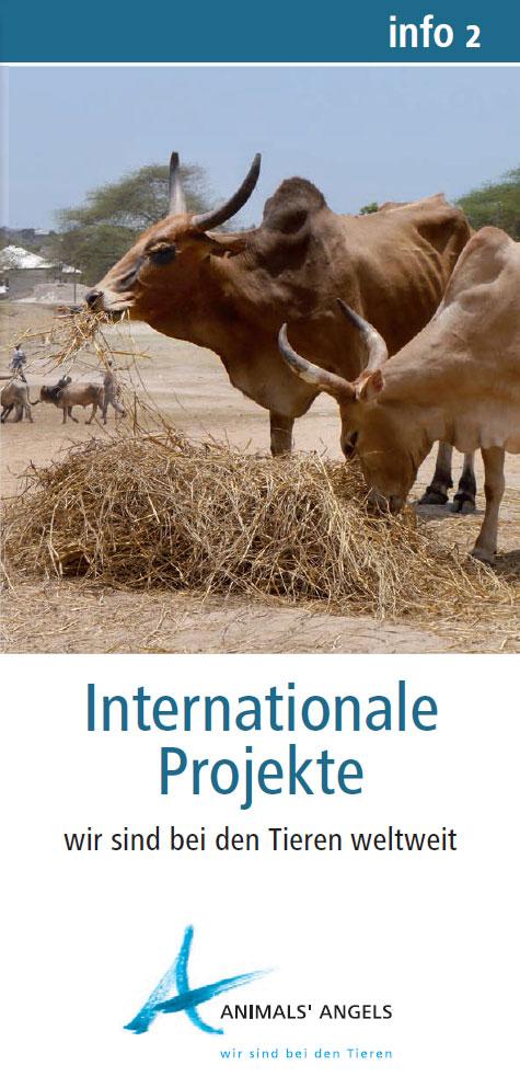 Info2 - Internationale Projekte