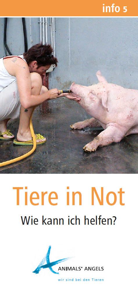 Info5 - Tiere in Not
