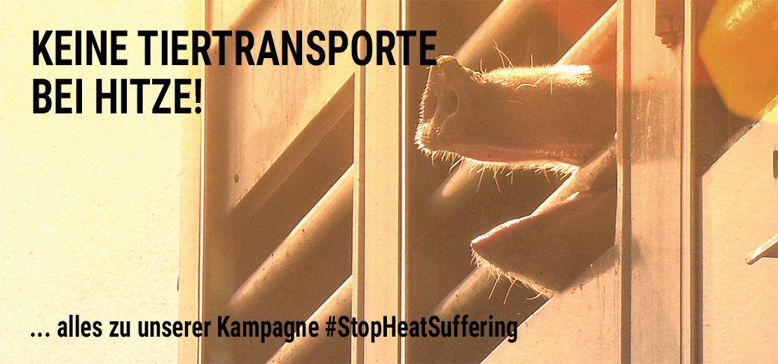 #stopheatsuffering