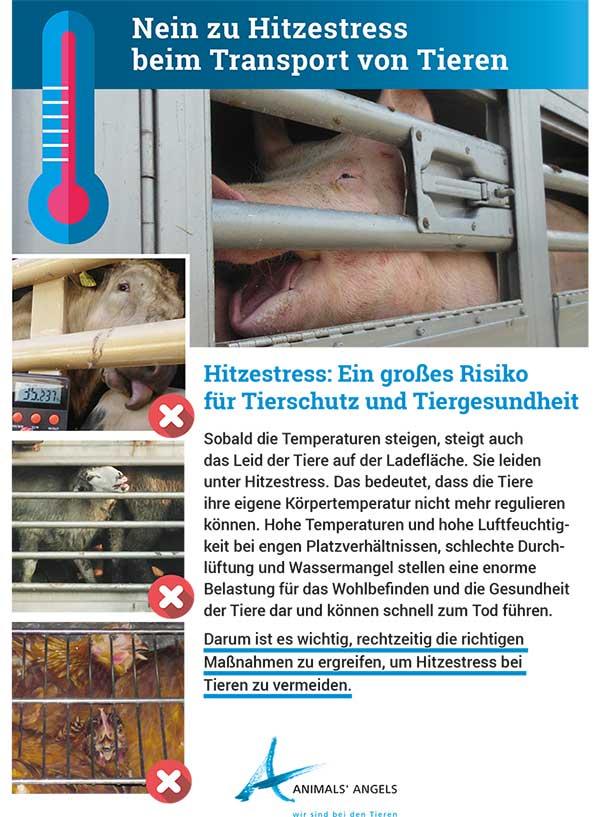 Infoblatt: Nein zu Hitzestress beim Transport von Tieren