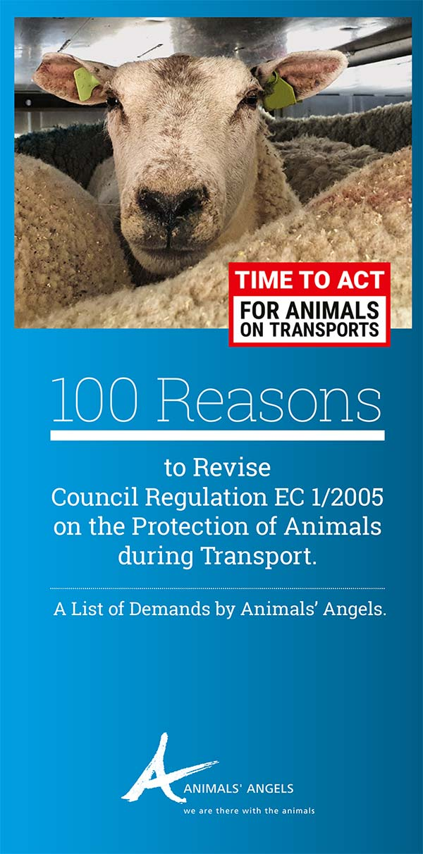 100 Reasons to Revise Council Regulation 1/2005