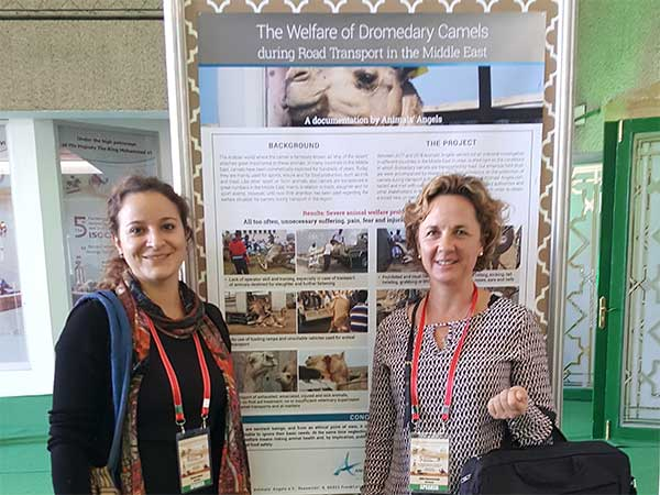 Animals' Angels auf der ISOCARD-Conference in Laâyoune