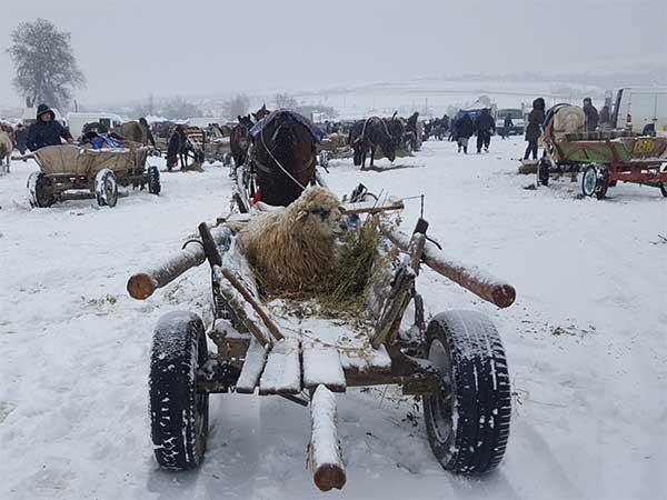 Tiermarkt in Rumänien: Handel bei eisigen Temperaturen