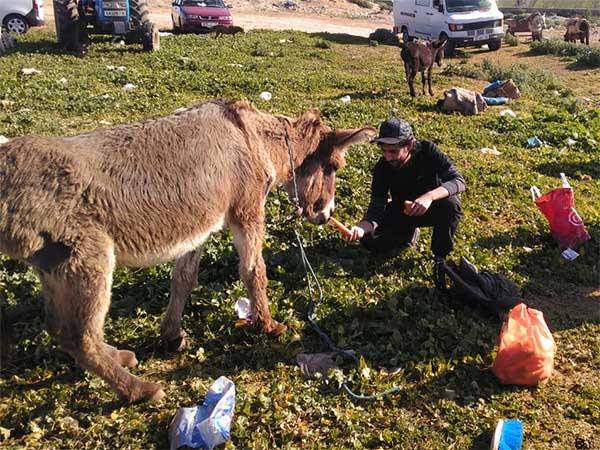 Das Animals' Angels-Team füttert die Tiere auf dem Markt von Houderrane, Marokko