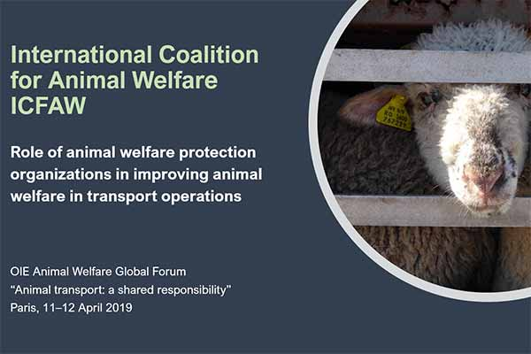 Animals' Angels Gives a Lecture at the OIE Animal Welfare Forum in Paris
