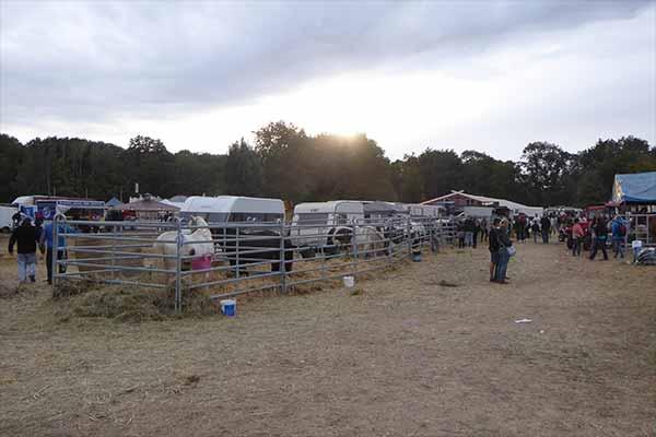 Pferdemarkt Havelberg: Die Pferde stehen jetzt in Panelboxen, die Anbindestangen wurden entfernt