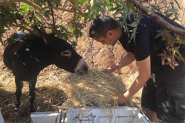 Animals' Angels is Helping the Animals at Mers El Kheir Market, Morocco