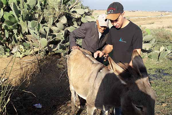 Animals' Angels is Helping the Animals at Skherat, Morocco