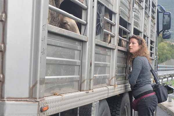 Animals' Angels Inspecting a Sheep Transport Going From France to Greece
