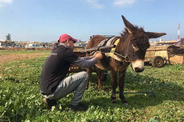 Animals' Angels im Einsatz auf einem Tiermarkt in Marokko
