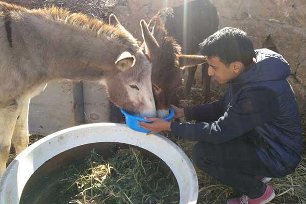 Das Team von Animals' Angels hilft den Tieren auf dem Tiermarkt in Skherat, Marokko