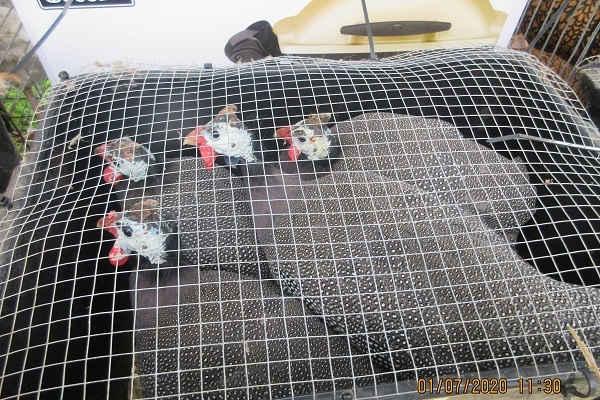 Die Tiere haben im Käfig nicht ausreichend Platz.