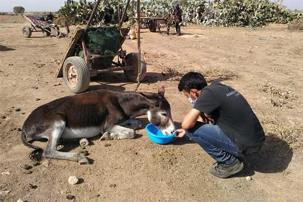Tiermarkt Marokko