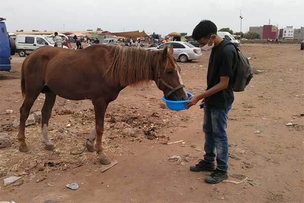 Animals' Angels versorgt die Tiere auf dem Markt in Mers El Kheir, Marokko