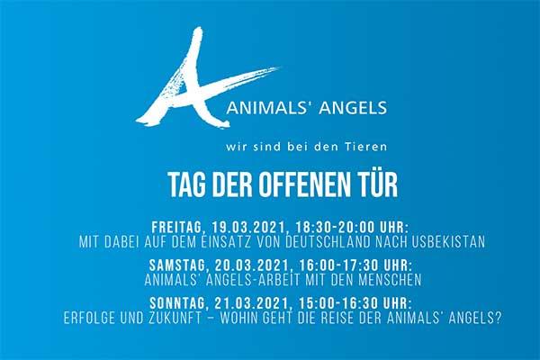 Mitschnitt Animals' Angels Tag der offenen Tür