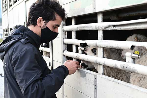 Animals' Angels kontrolliert Tiertransporte an Ostern in Italien