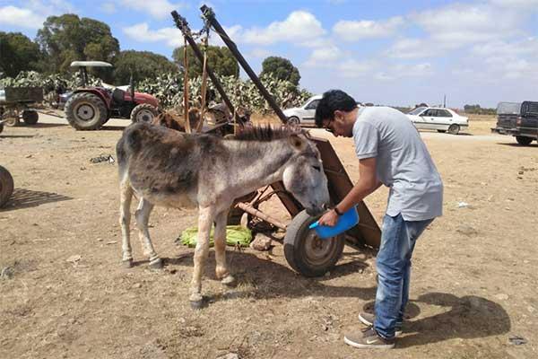 Animals' Angels im Einsatz für die Tiere auf dem Markt in Skherat