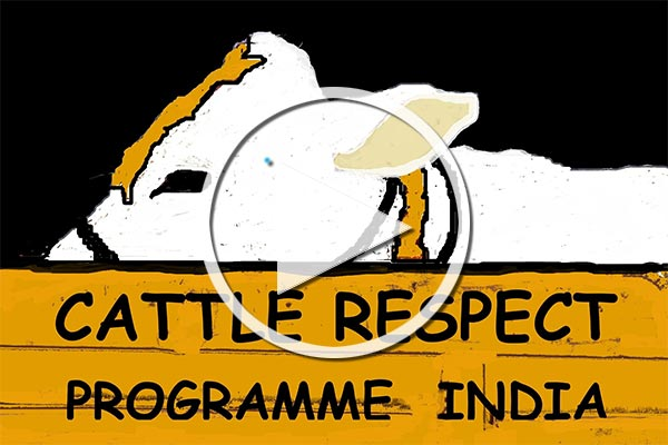 Cattle Respect Programme Kurzfilm