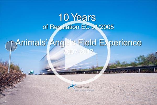 Animals' Angels Kurzfilm 10 Jahre EU-Tierschutz-Transportverordnung