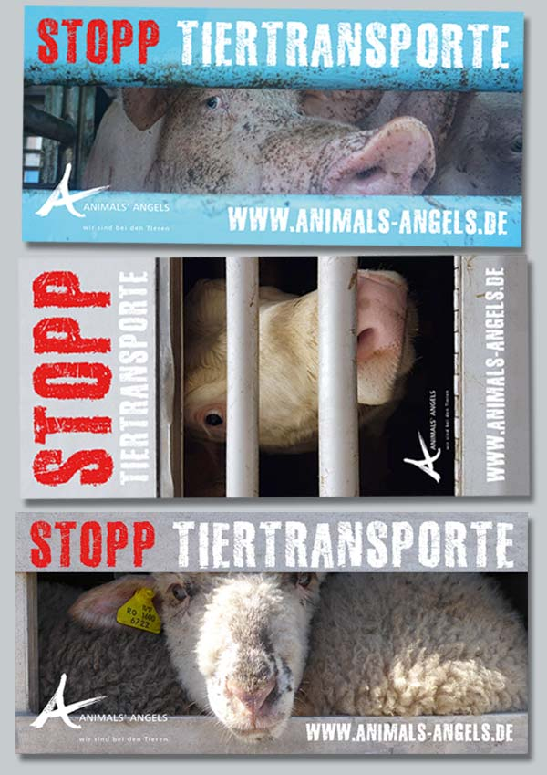 "Animals' Angels Aufkleber ""Stopp Tiertransporte"""
