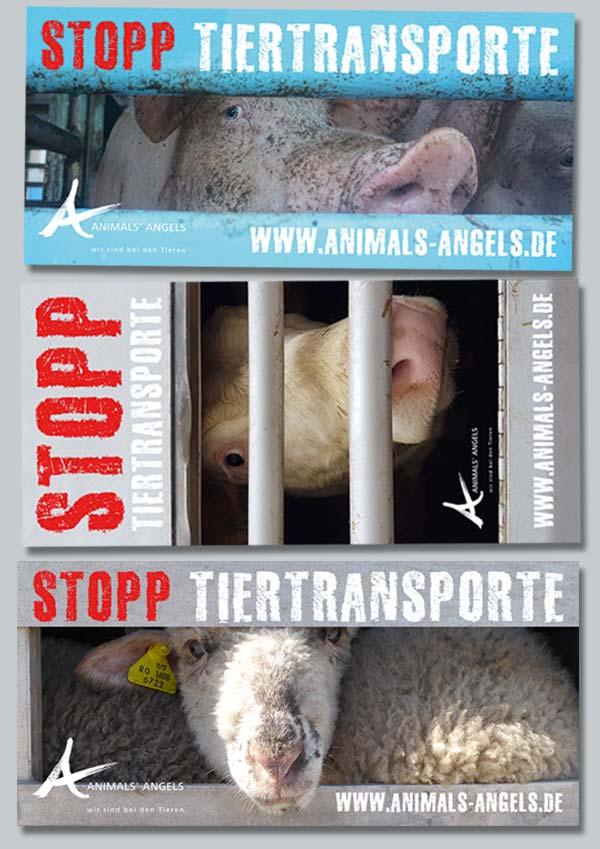 "Animals' Angels Aufkleber ""Stopp Tiertransporte"""