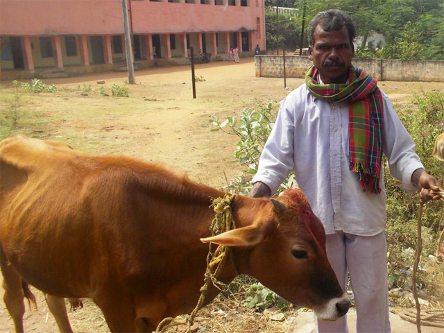 CRPI India, Calf adoption Programme at Simhachalam Temple