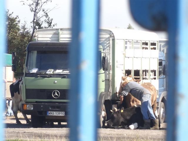 Polen, Tiermarkt Radzymin
