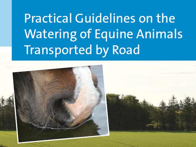 Guidelines zur Tränkung von Equiden beim Transport