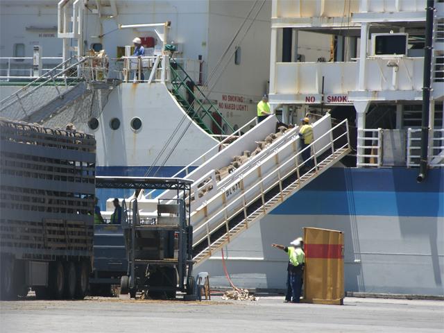 Schafexporte, Australien